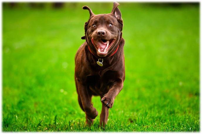 楽しそうに走る犬、わお~ん♪